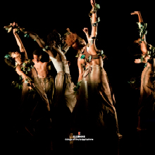 SHADE! (The Secret Dance of Trees) Choreographed by C. Kemal Nance for November Dance 2014,  Photo by Natalie Fiol